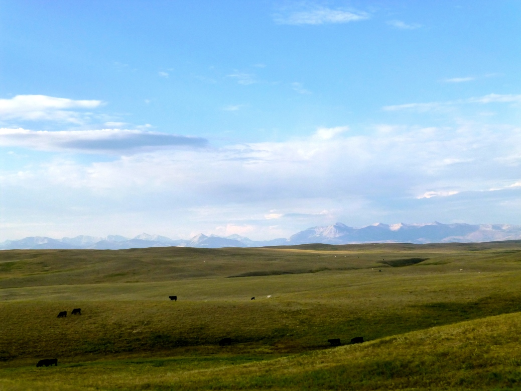 ::this is technically on our drive out. happy cows come from montana?::