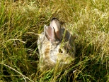 ::badass badlands bunny::