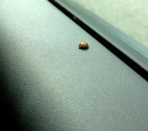 ::this little guy joined for the ride down to VA, I thought it was good luck::