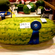 ::now that's a big watermelon::