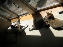 ::bonding with the kitties::
