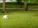 ::dog on a squirrel hunt::