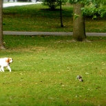 ::dog on a squirrel hunt::