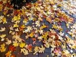 ::i love fall::