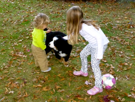 ::cooper and jill playing with the neighbors adorable puppy::