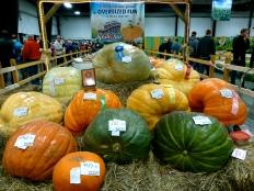 ::mighty pumpkins::