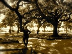 Love the live oaks