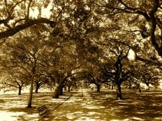 White Point Garden