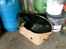 ::dog in a box::
