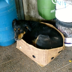 ::dog in a box::