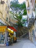 ::banyan trees::