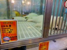 ::goldfish market::