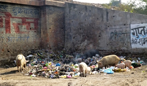 ::pigs and trash::