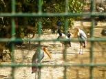 ::crazy Indian birds::