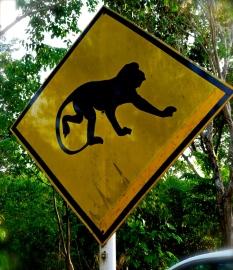 ::monkey crossing!::