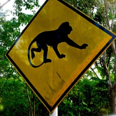 ::monkey crossing!::