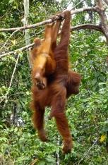 ::monkeying around::