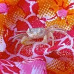 ::crabbies::