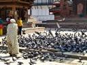 ::feeding the pigeons::