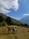 ::horse and Everest::