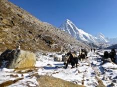 ::magical North Pole yaks::