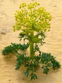 ::funky desert plants::