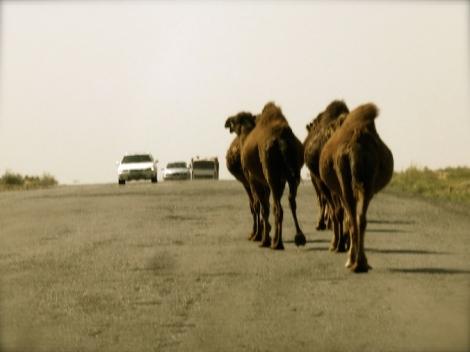 ::camel jam::