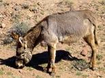 ::donkeys!::