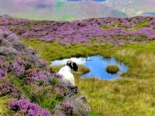 ::miles of heather::