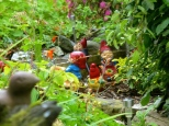 """::it's nearly physically impossible for me to not sing """"rolling with the gnomies"""" when I see gnomes::"""
