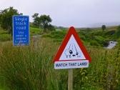 ::lamb crossing, everywhere::