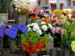 ::flower market::
