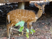 ::bambi!::