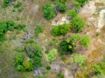 ::elephants from the air::