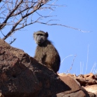 ::there are sporadic signs of baboon life along the way::