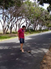 ::official turtle rescuer::